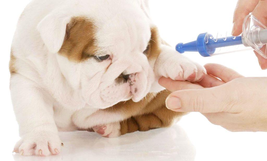 زمان واکسیناسیون توله سگ
