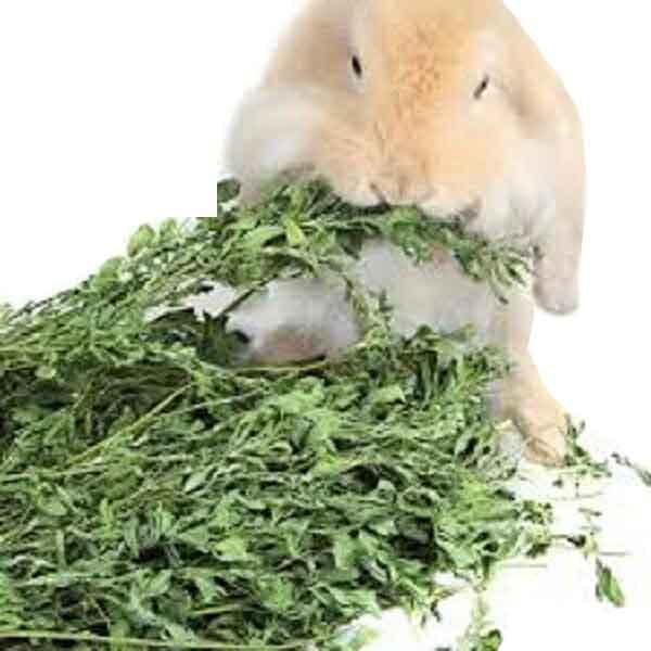 یونجه مخصوص خرگوش چیتا 1kg